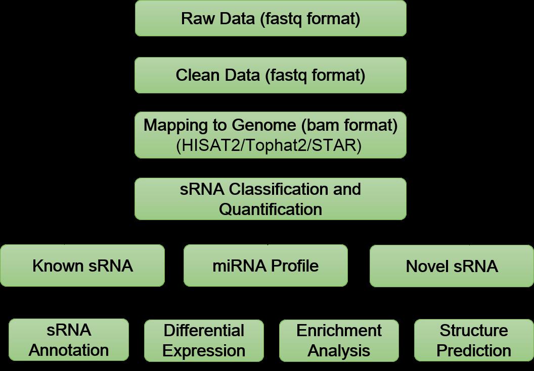 Exosomal Small RNA Sequencing