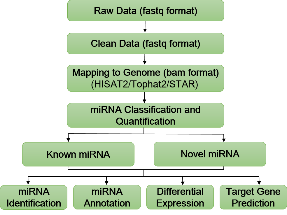 Exosomal microRNA Sequencing