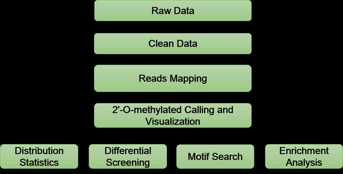 2-O-Methylation Sequencing