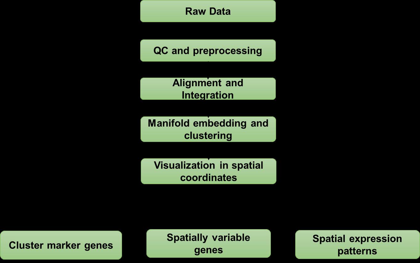 Spatial Transcriptome Sequencing