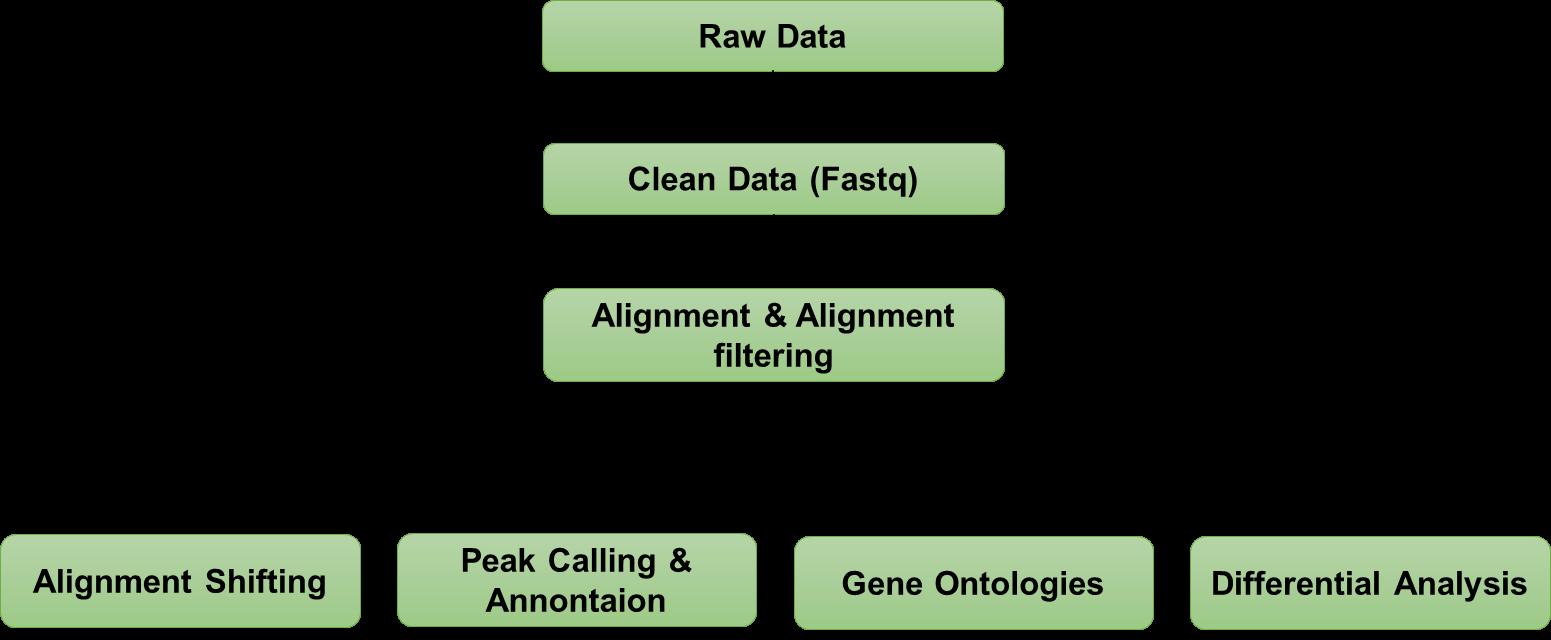ATAC Sequencing