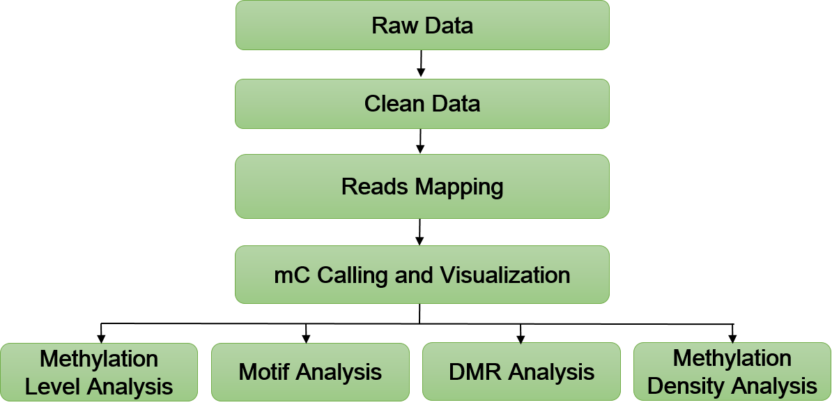 m5C-RIP Sequencing