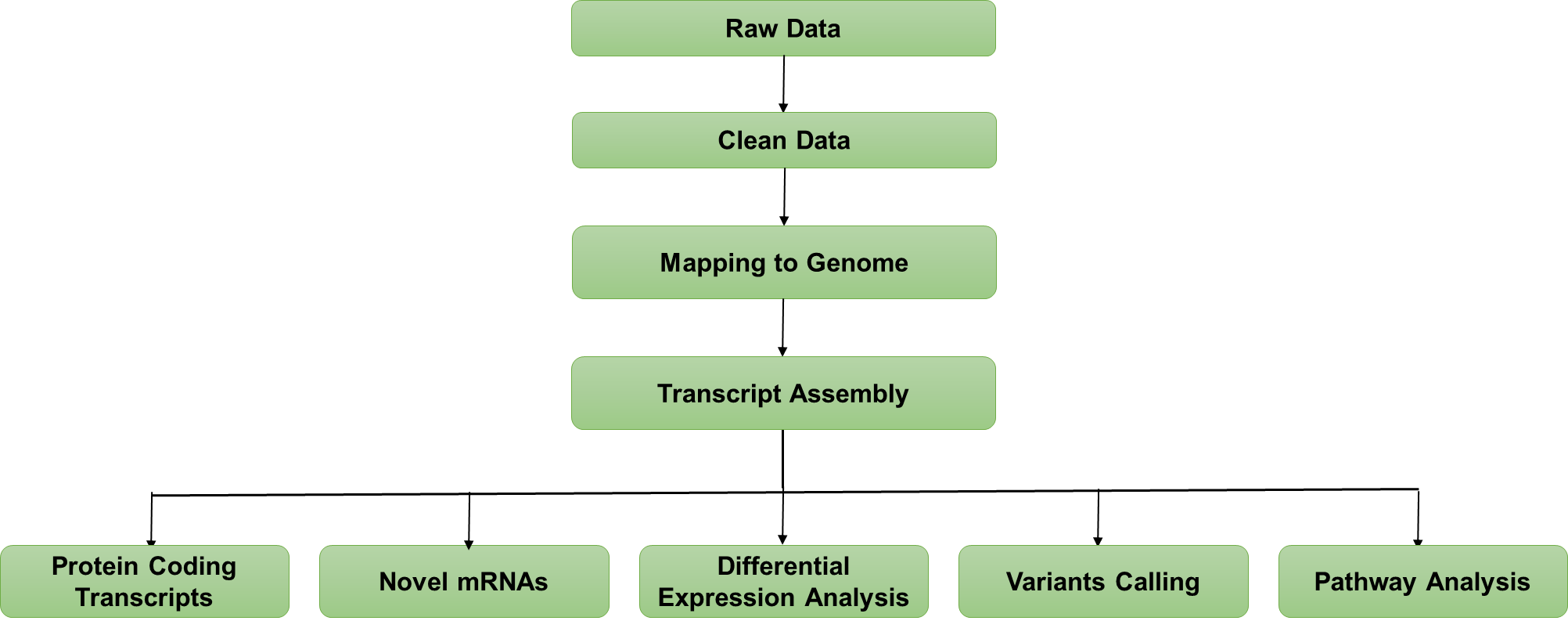 RNC-mRNA Sequencing